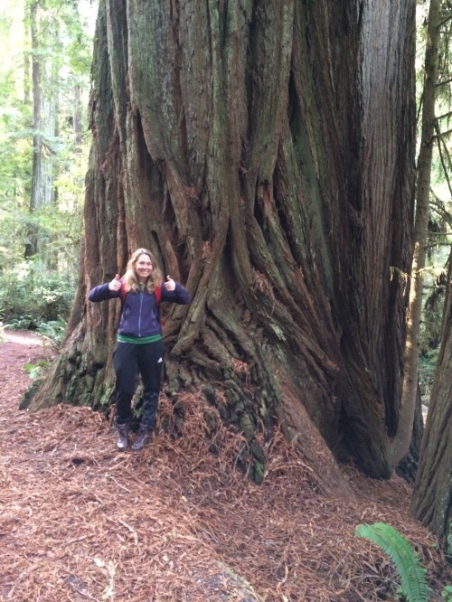 Claire next to a really big redwood