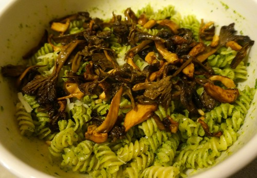Pesto pasta with hedgehog and yellow foot chanterelles on top.
